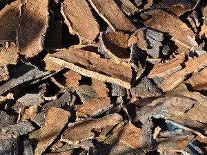 Лечение пупочной грыжи отваром дубовой коры