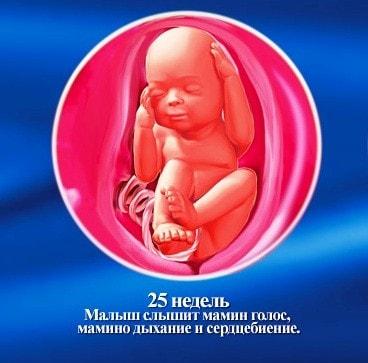 25 неделя беременности: что происходит с малышом и мамой, фото, развитие плода