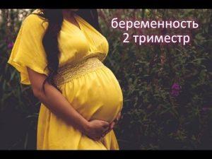 Второй триместр беременности: размер и вес плода, состояние беременной, необходимые анализы