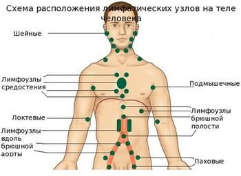 Местонахождение лимфоузлов
