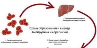 Норма билирубина в крови у женщин: таблица по возрасту, уровень билирубина в крови норма после 50 лет