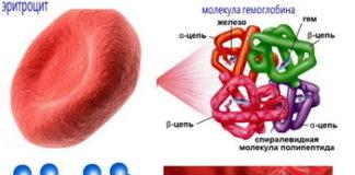Норма гемоглобина в крови у женщин: таблица по возрасту, уровень гемоглобина в крови норма после 50 лет