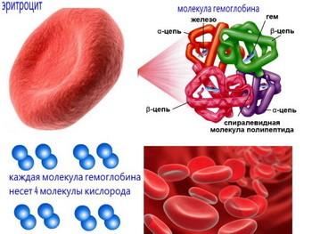 Какой уровень гемоглобина должен быть у женщин