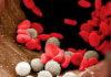Норма лейкоцитов в крови у женщин: таблица по возрасту после 50 лет