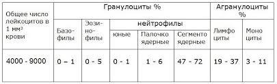 Норма лейкоцитов в крови у женщин: таблица