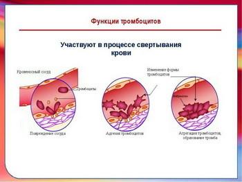 Тромбоциты 180 у женщины